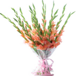 A Hand tide bunch of 15 fresh gladioli