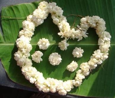 fresh jasmine gajra roses gajra blue orchid gajra mogra tiara