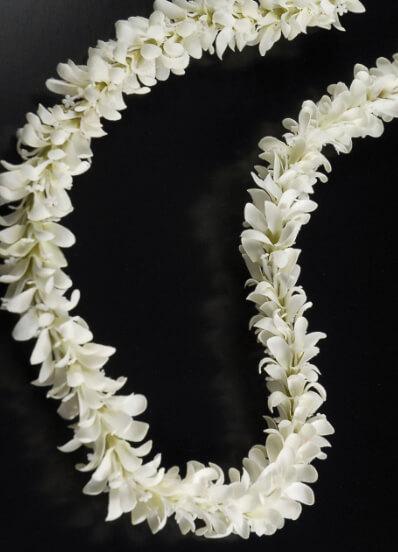 Fresh Jasmine Gajra Roses Gajra Blue Orchid Gajra
