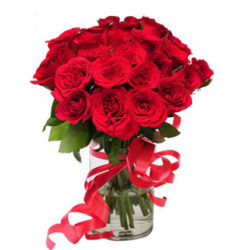 pure red rose delight in a glass vase