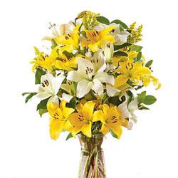 white n Yellow Delight